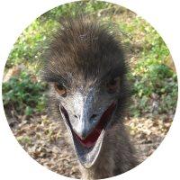 Sydney the Emu