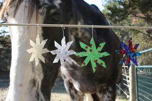 Horse looking at ornaments